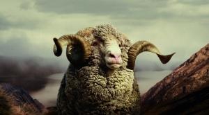 Icebreaker Merino Sheep